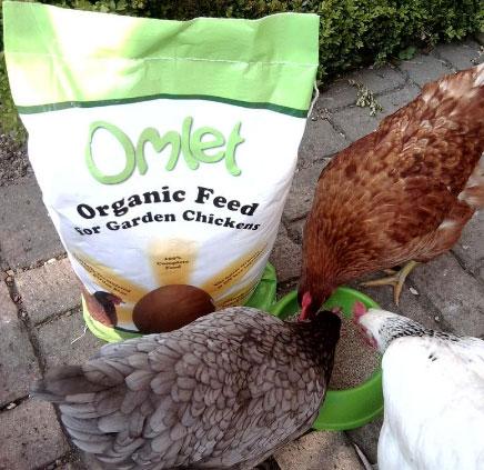 Nourriture poule Omlet