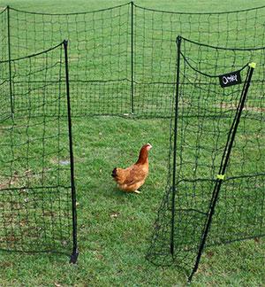Le filet poules omlet pour cl turer vos espaces - Filet a poule ...