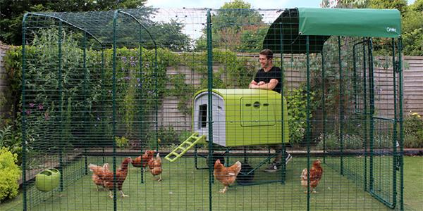 Un enclos pour poules avec votre poulailler omlet - Enclos a poule ...