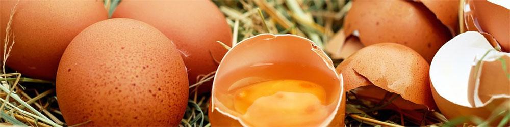 Bienfaits de l'œuf sur la santé