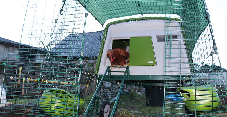 enclos poulailler Eglu Cube Omlet