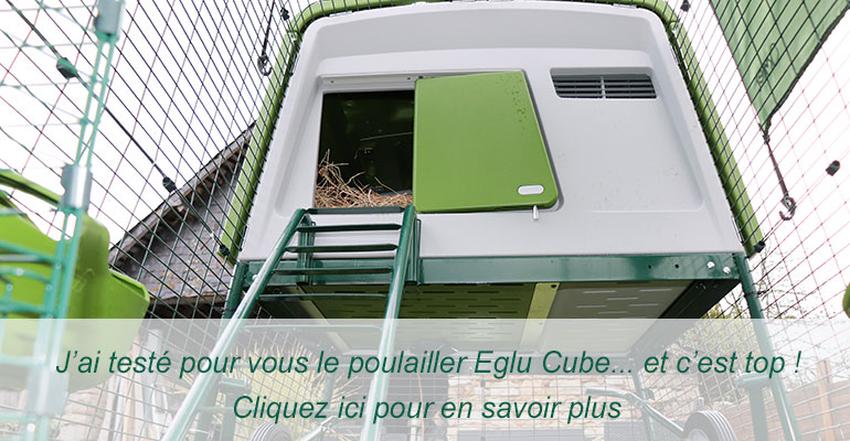Test du poulailler Eglu Cube Omlet