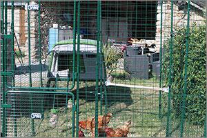grand enclos pour poules OMLET