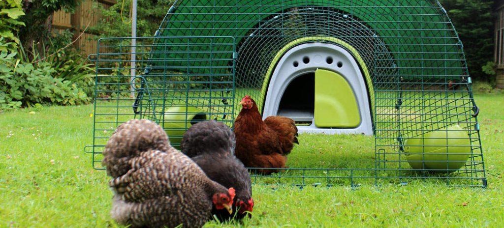 meilleurs poulaillers 3 poules EgluClassic de la marque Omlet